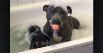 Bestie Bath Time!