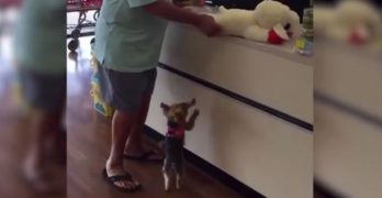 Lucy Gets Her Toy: Cutest Thing You'll See Today!