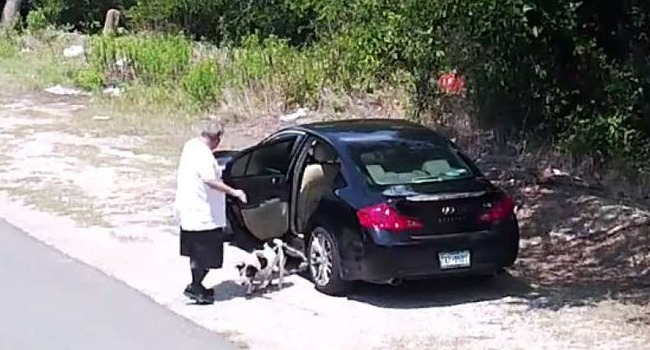 This Dog's Cruel Abandonment Was Captured On Video, But Her Story Has A Happy Ending.