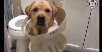 Ready To Laugh? Watch These Guilty Pups Get BUSTED!