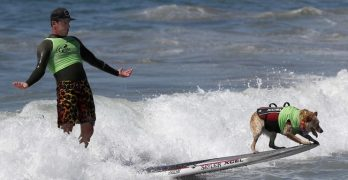Hang Twenty! Canines Compete in 9th Annual Surf City Surf Dog Competition