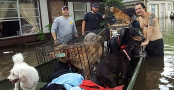 Dog Lovers Unite To Rescue 21 Canine Harvey Victims in One Boat!