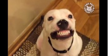 Say CHEESE! Or Maybe Bacon? Ten Great Smiling Dogs