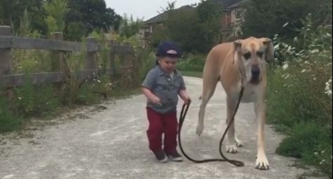 Big Dog-Little Man BFFs Will Make Your Day