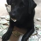 Dog Hoards Cash For Cookies!