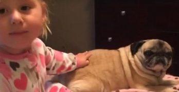 Little Girl Loves Her Pugs, But Talulahbelle's Her Special Senior