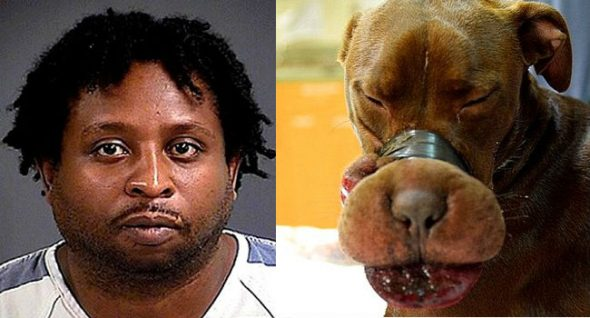 UPDATE: Parole Denied for Abuser of Caitlyn the Canine