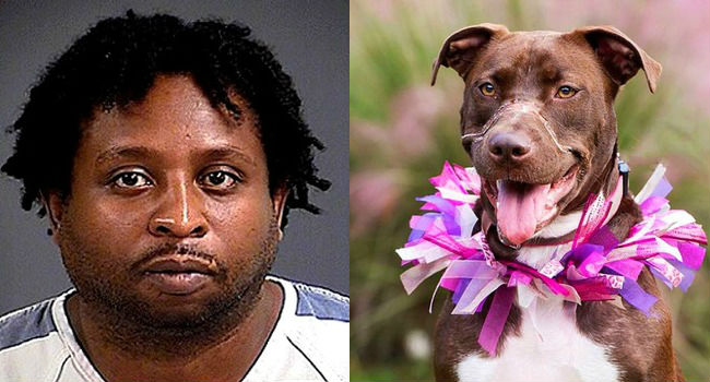 UPDATE: Parole Denied for Abuser of Caitlyn the Dog