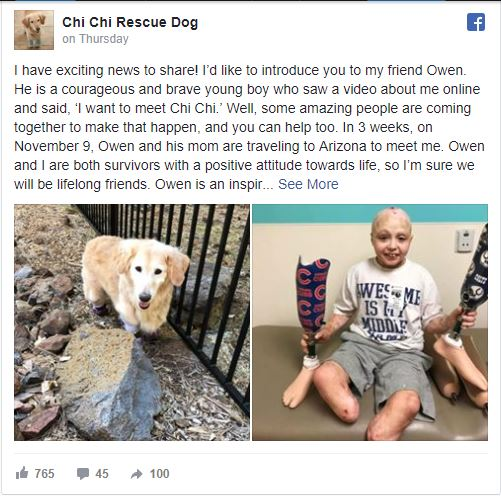 10-12 months-Outdated Amputee Needs To Meet Chi Chi, the South Korean Rescue Who Misplaced Her Legs