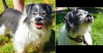 Clancy Is the Scruffy Little Snaggle-Tooth Of Your Dreams …!