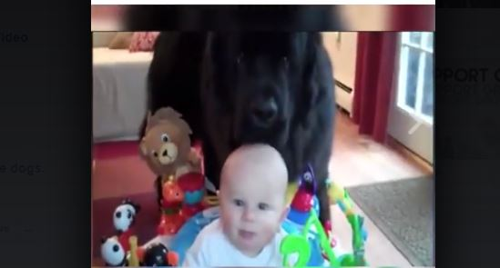 Dogs & Kids: This Adorable Video Will Have You Laughing Out Loud