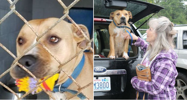 Justice! Wrongfully Accused & Unfairly Imprisoned, Hank Has Finally Been Released To His Family!