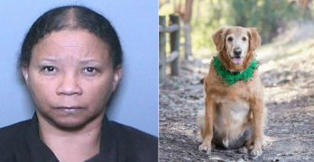 PUPDATE! Woman Who Abandoned Dog With Giant Tumor Banned From Owning Pets