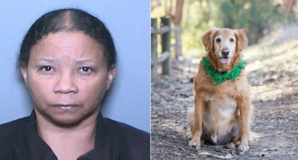 PUPDATE! Lady Who Deserted Canine With Big Tumor Banned From Proudly owning Pets