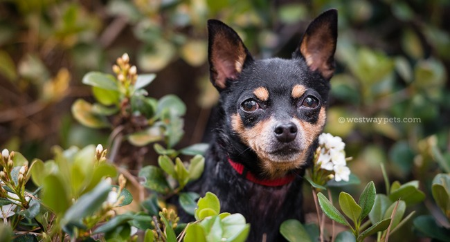 Adoptable Senior Miss Madi Is About To Steal Your Heart…!
