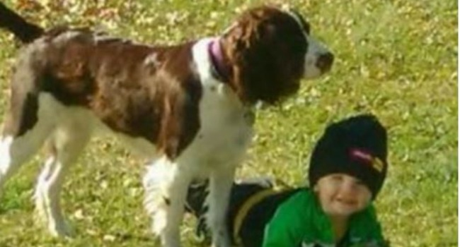 The Heat Brings The Heat! Protective Family Dog Helps Patrol Chopper Locate Missing Toddler
