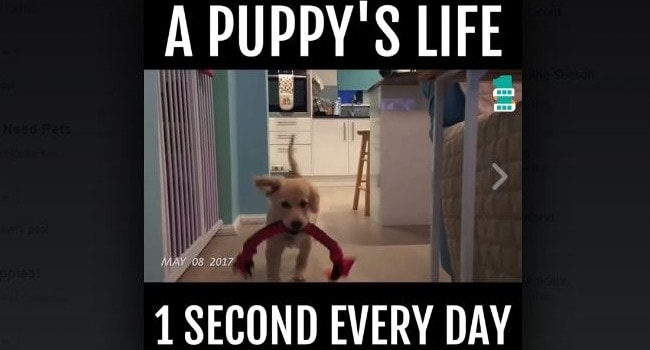 A Puppy's Life: One Second Every Day