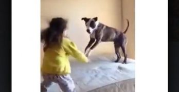 Little Girls Teach Their Pibble To Bounce On The Bed