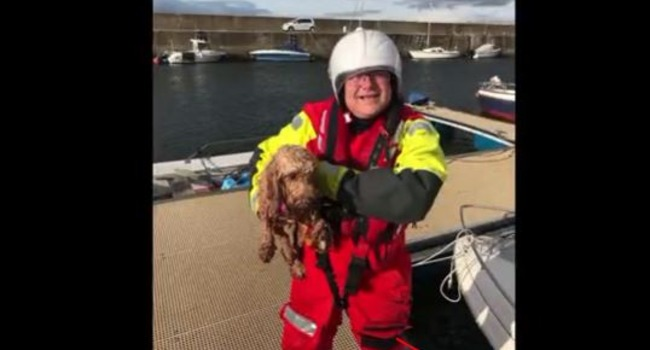 Caught on Camera! Dog Spotted By U.K. Coast Guard Rescued At Sea