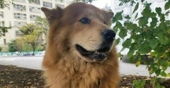 NYC Passenger Forces Departing Plane Back To Terminal After Pet Dog Escapes