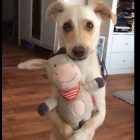This Pup & His Stuffed Animal Are A Hug For Your Heart