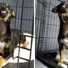 Texas Shelter Dog's Winning Smile Wins The Internet!