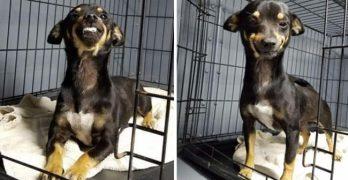 Texas Shelter Dog's Winning Smile Wins The Internet!