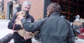 """The Walking Dead's"" Norman Reedus Clearly Adores Dogs. WATCH!"