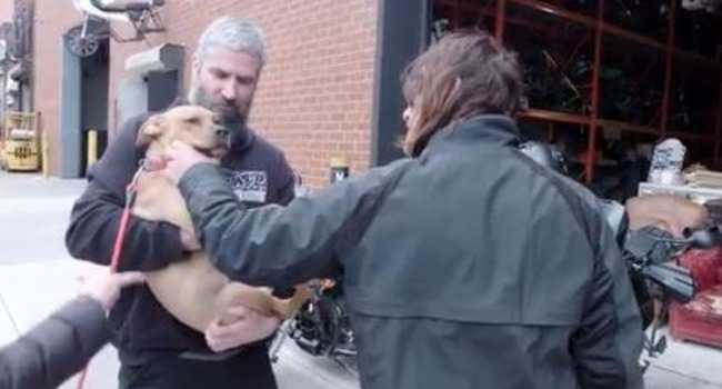"""""""The Walking Dead's"""" Norman Reedus Clearly Adores Dogs. WATCH!"""
