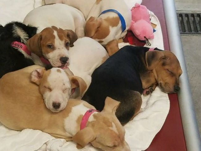Hurricane Maria Refugees Arrive in New Jersey: 33 Dogs & 58 Cats Await New Homes