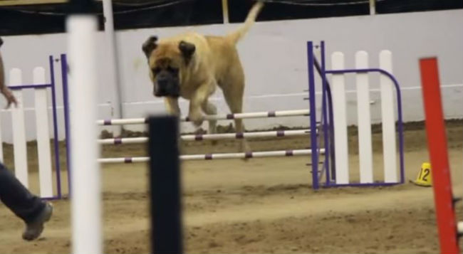 There's More Than One Way To Tackle The Canine Obstacle Course…!