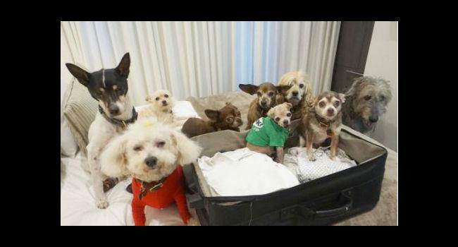 This Man Can't Stop Adopting Senior Dogs…!