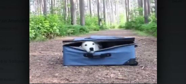 """""""Only Pack The Essentials"""""""