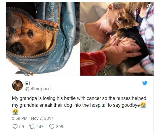 Dying Man Says Ultimate Goodbye To Canine With Assist From The Nurses