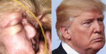 Dog's Cyst Bears EAR-ie Resemblance to Donald Trump