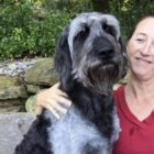 Delaware Veteran Searching Desperately For Missing Service Dog, Ozzy