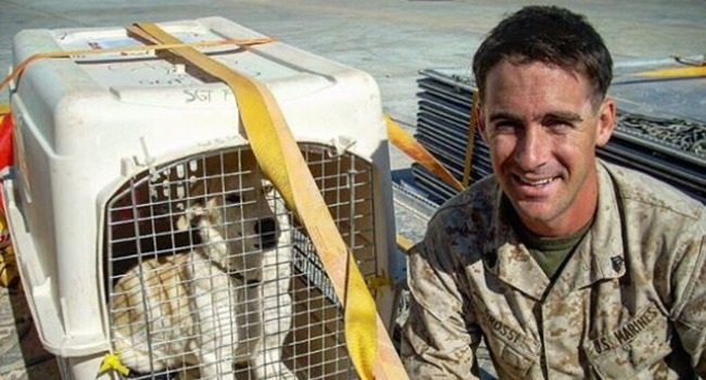 This Afghan Street Dog Taught A U.S. Marine About The Power of Positivity. Now They've Written A Book About It.