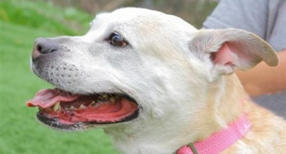 Bella Is The Lovely Lady Who's Been Lacking In Your Life