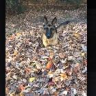 When Your Dog REALLY Likes Fall…!