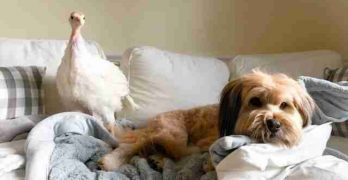 Minnow Loves Blossom: Rescue Dog & Rescue Turkey Are The Best of Friends
