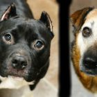 Bonded Besties Roxie & India Are Ready To Fortify Your Family With Love