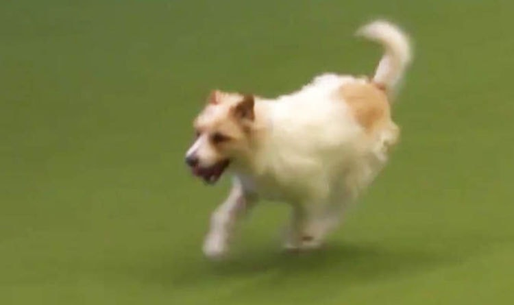 Need Work-Week Inspiration? Watch Olly Run The Course at Crufts!