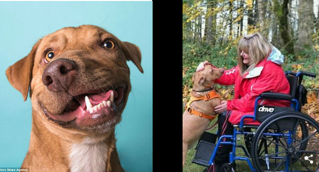 PUPDATE! Deformed Rescue Pup Picasso Finds Forever Home & Life's Purpose After The Tragic Loss Of His Brother