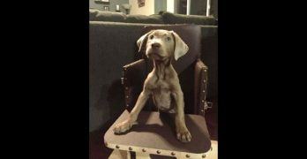 Tink Is A Normal Dog In Every Way, Except She Sits In A High Chair To Eat!