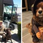 Boxes & Biscuits! UPS Dogs Features Drivers Who Love The Dogs On Their Routes