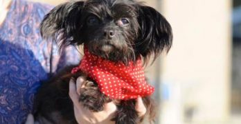 Adorable & Adoptable: Get A Load Of Gorgeous, Little Greta!