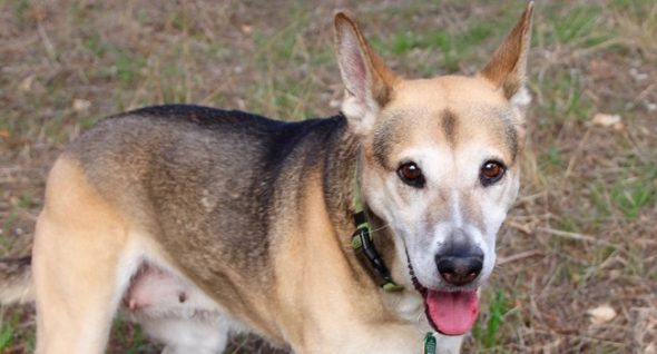 LWD Adoptable Canine of the Day: Petite, Candy Woman's Tail By no means Stops Wagging!
