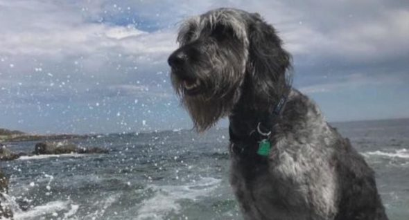 Ozzy Nonetheless Lacking: Veteran Finds eight Different Canine Whereas Looking out For Hers
