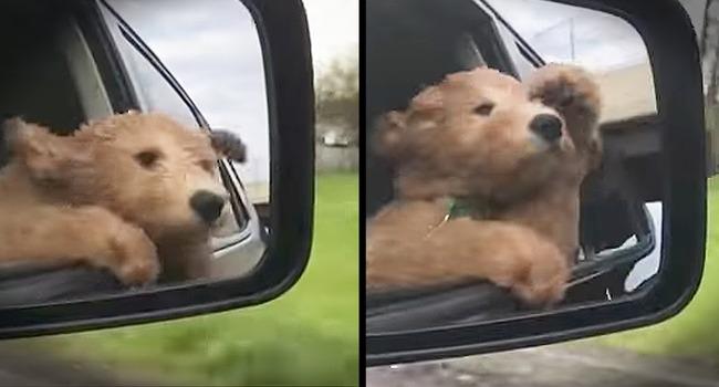 This Puppy Is On His First Road Trip & He LOVES It!