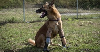 "Dog Maimed By Angry Neighbor Now The World's First Canine ""Blade Runner"""